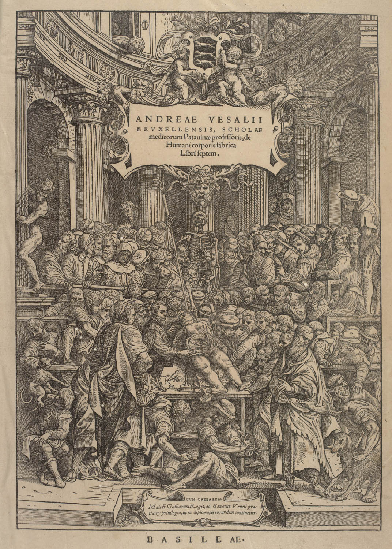Tavle fra: Andreas Vesalius: De humani corporis fabrica ... 1543